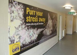 Cats Protection wall graphics