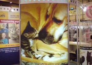 Cats Protection Exhibition graphics