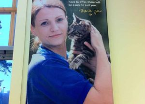 Cats Protection banner graphics